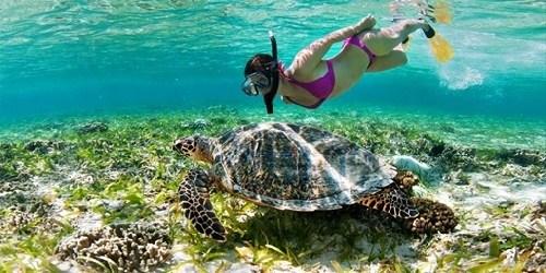 Sup / snorkeling CBCM
